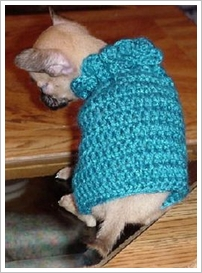 dog-sweater-crochet